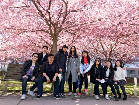 图1 樱花树下意气风发的同学们